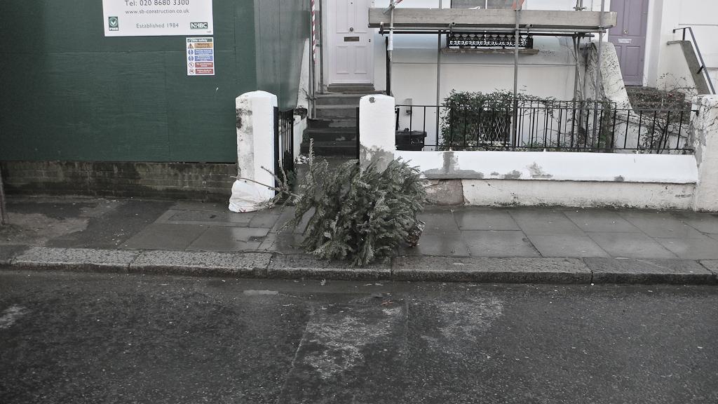 Ex-mas trees-10