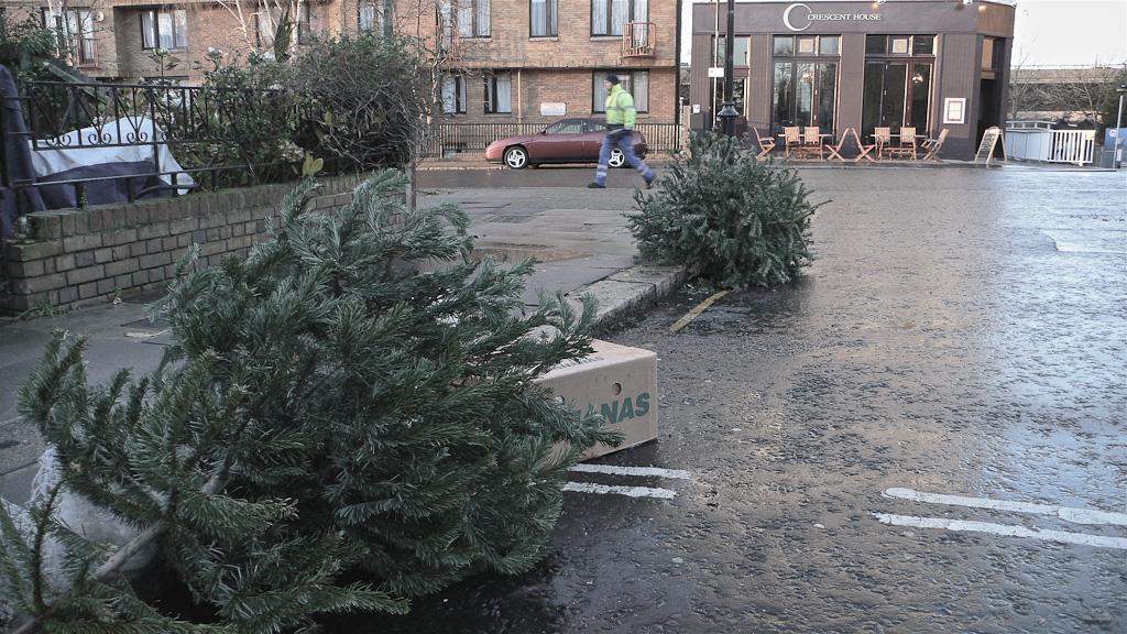 Ex-mas trees-13
