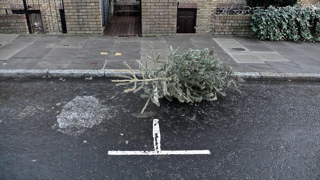 Ex-mas trees-14