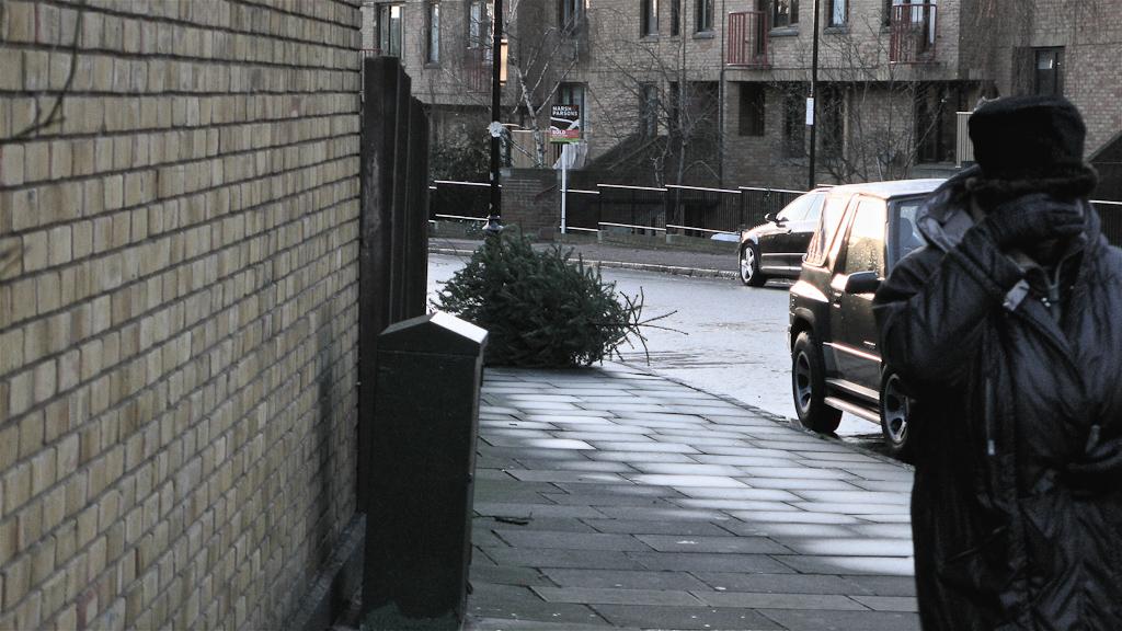 Ex-mas trees-20