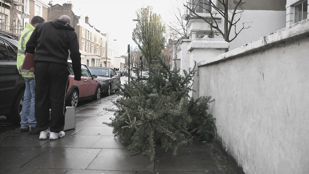 Ex-mas trees-7