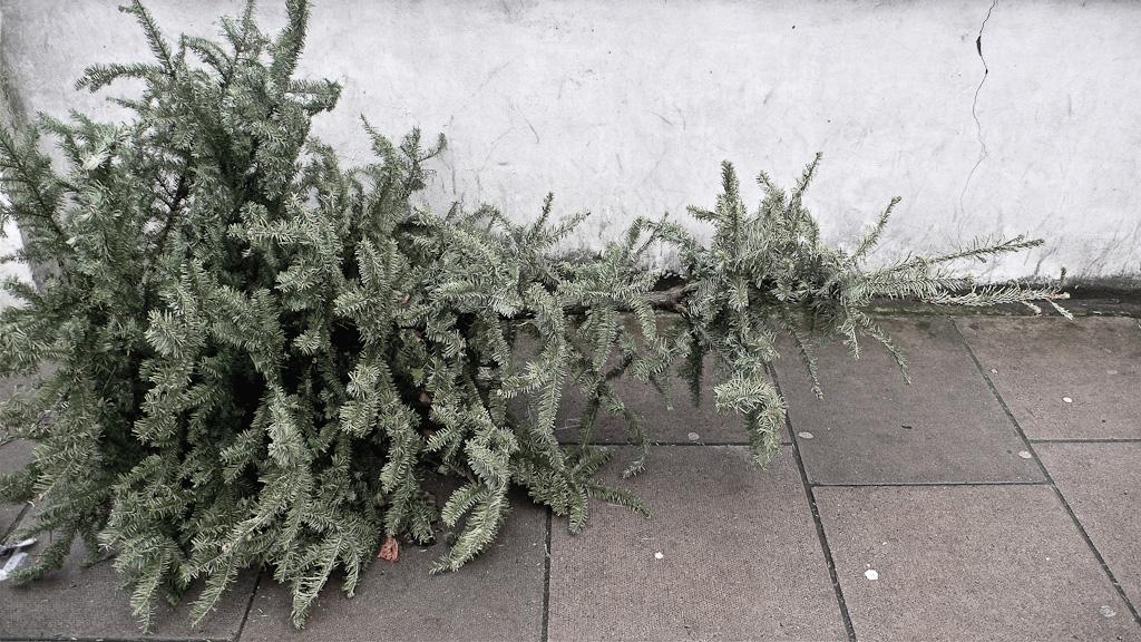Ex-mas trees-9