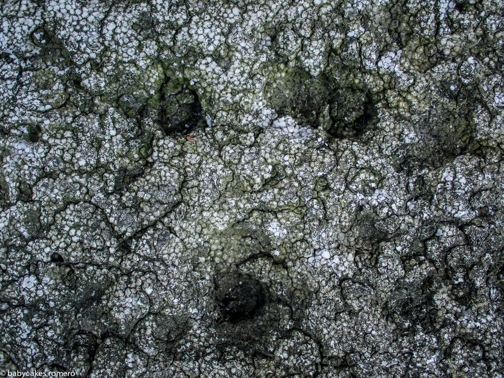 surfaces-12